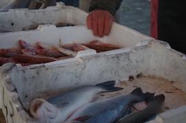 Livorno - Mercato del pesce